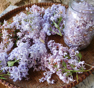 Homebrewing French Lilac Wine