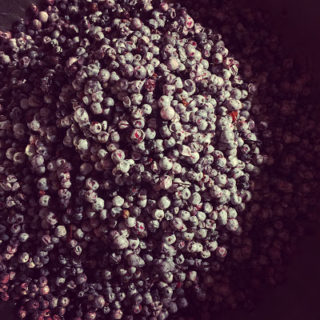 Homebrewing Elderberry Wine
